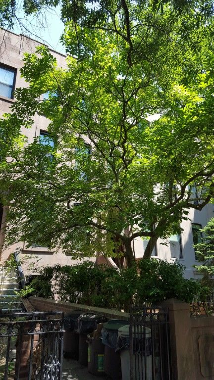 Grand One Bedroom/Convertible 2 Bedroom Loaded With Detail Photo 15 - BBR-2804
